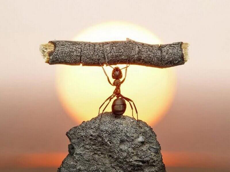 Góc sẻ chia: Bài học về sự kiên trì